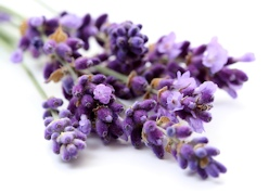 Aromatherapy Health Care - Lavender Flowers